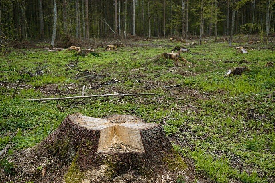 ścięte drzewo